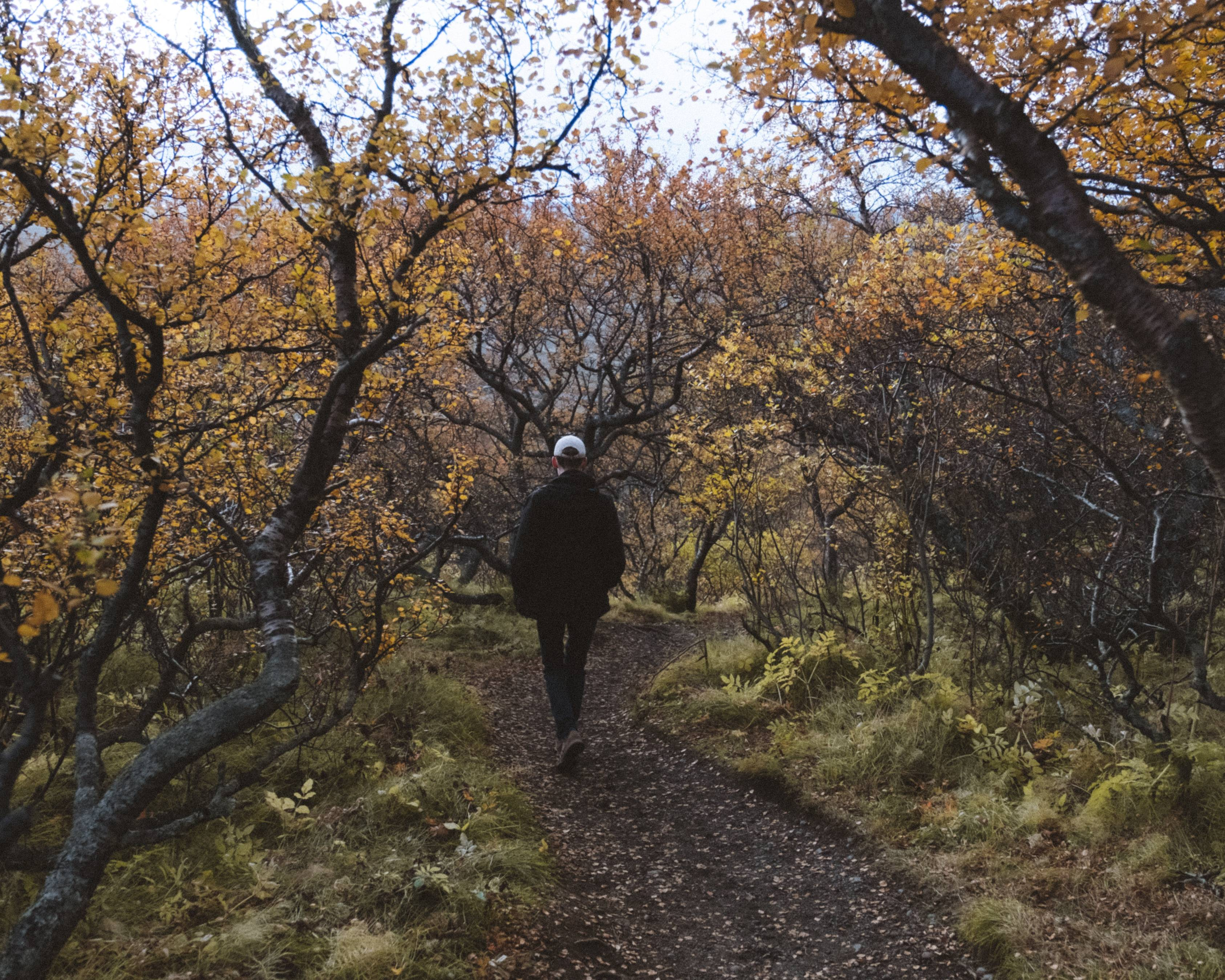man-with-a-white-cap-hat-walking-in-birch-forest-in-iceland-on-narrow-dirt-road-in-autmn